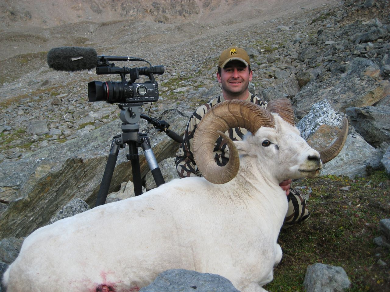 robert sheep 4