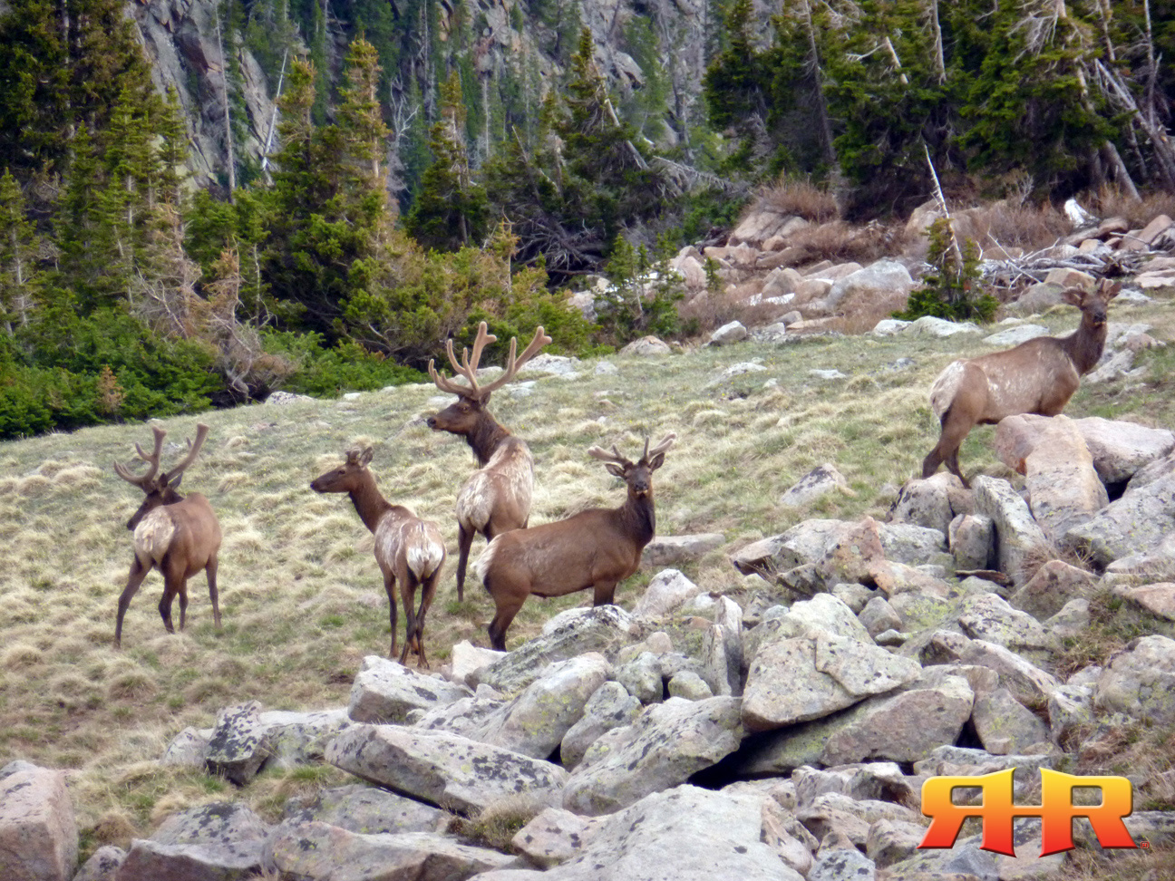 bulls in velvet - alpine - 053012 rhr 1