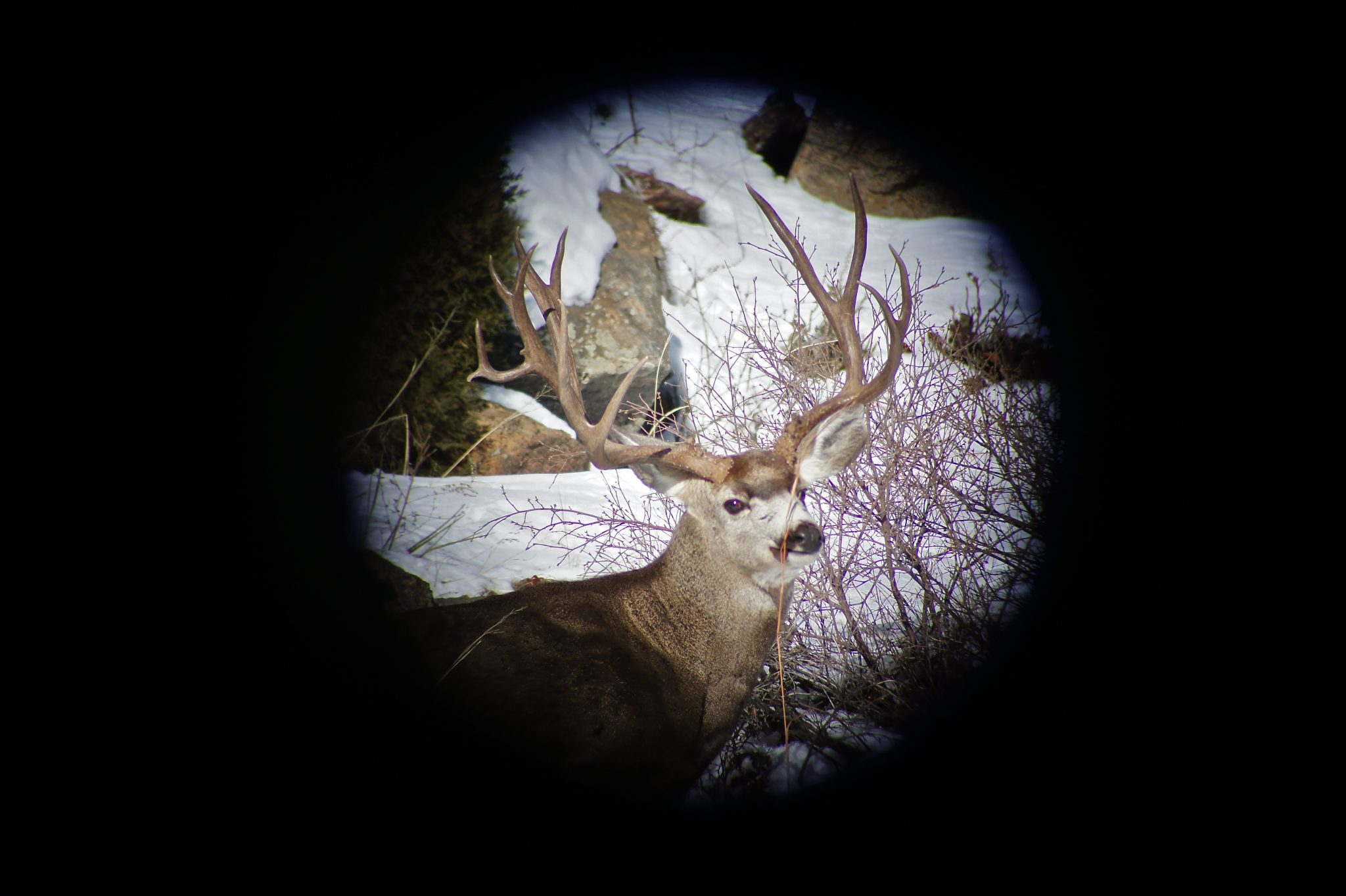 Digiscoping is a great way to document the animals you see scouting and on your hunt