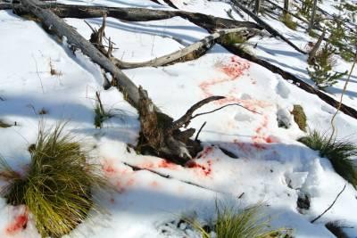 b2ap3_thumbnail_bloodtrail.jpg