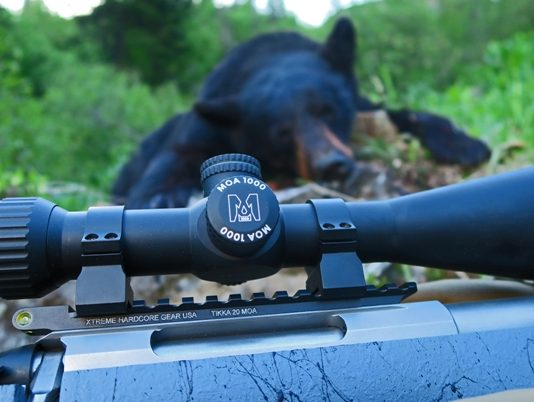 Bear and scope