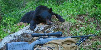 justing Bear and Rifle