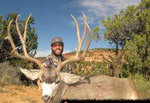 Lorenzo-Sartini-2014-mule-deer